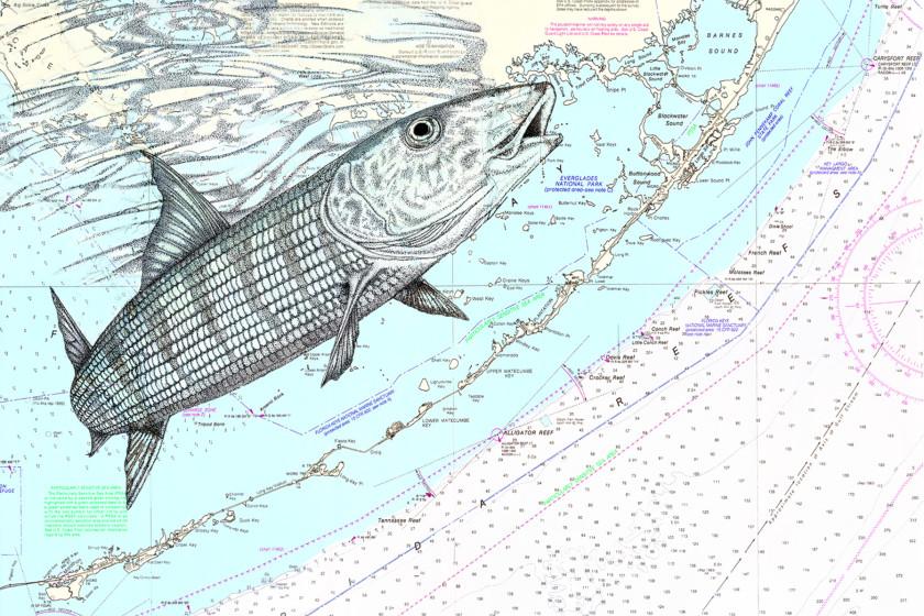 BID-292-AttheSurface(Bonefish)